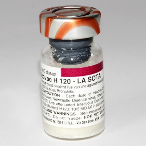Izovac H120 Lasota (1000 Doses)